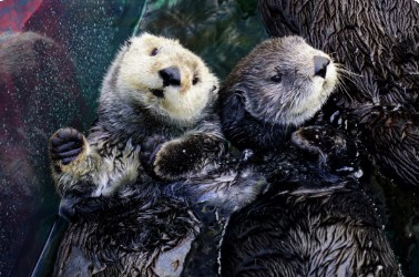 The Live Cams of Monterey Bay Aquarium